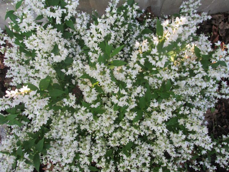 Types of shrubs for your backyard