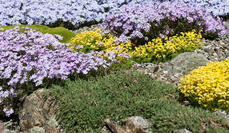 Ground cover ideas for your landscape.
