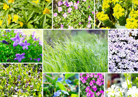 The best ground cover plants for your garden and landscape.