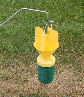 Japanese beetle trap to take control of your yard
