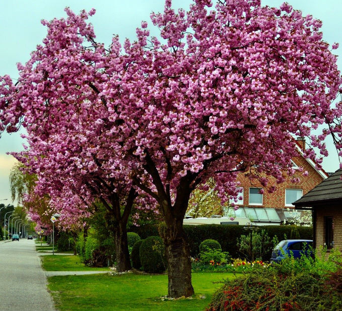 Adding Flowering Ornamental Trees To Your Landscape